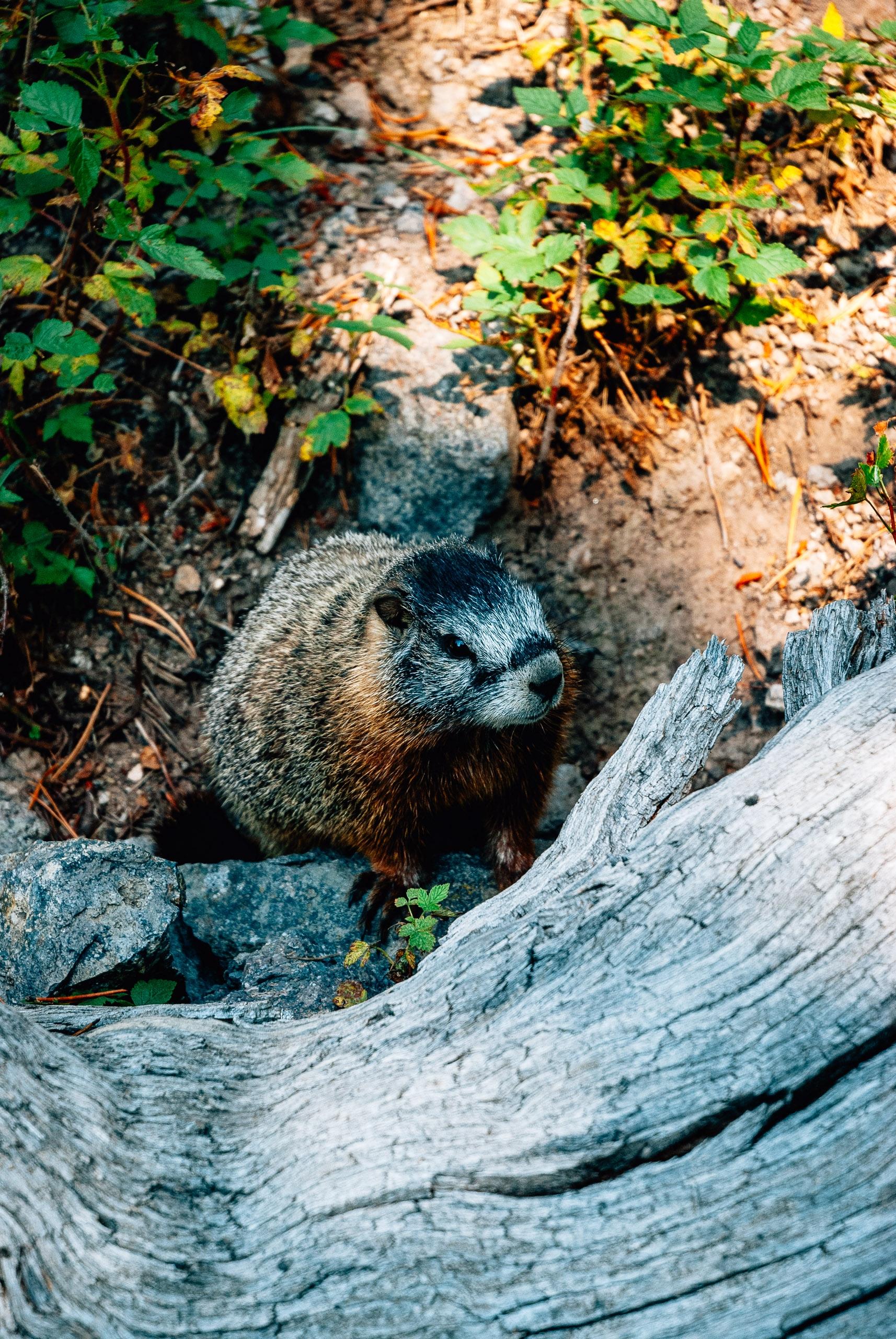 Yellowstone National Park - 2007-0827-DSC_0035_108993