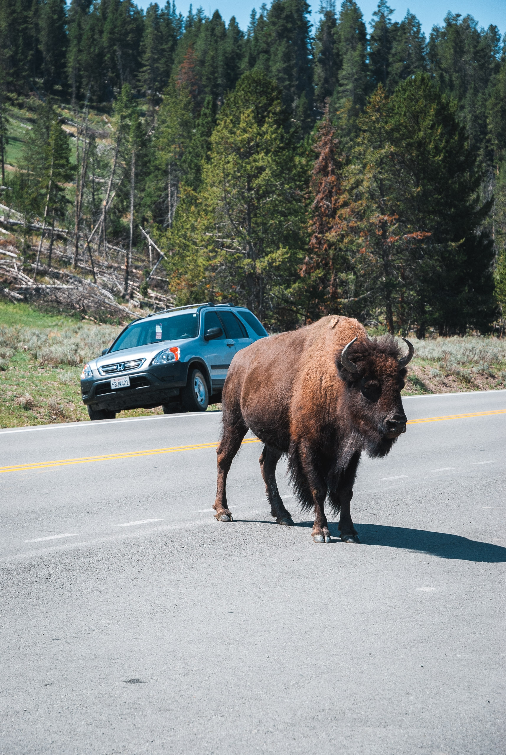 Yellowstone National Park - 2007-0827-DSC_0085_70558