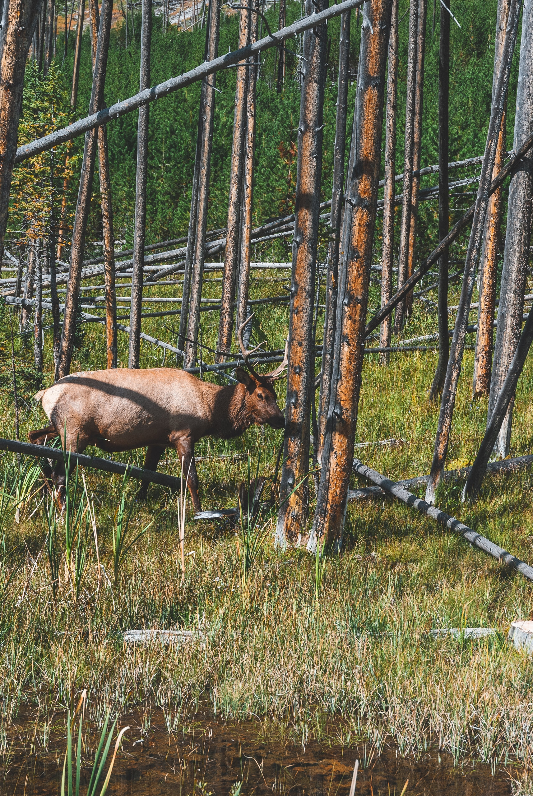 Yellowstone National Park - 2007-0827-DSC_0141_121709