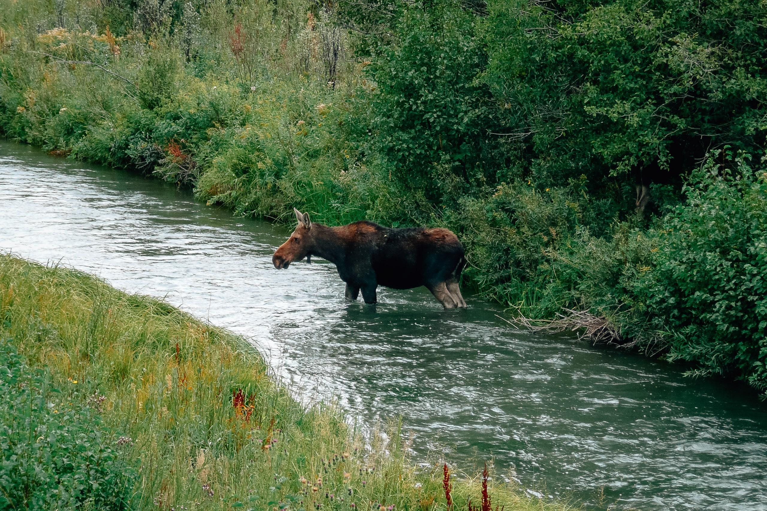 Grand Teton National Park - 2007-0831-P1000941