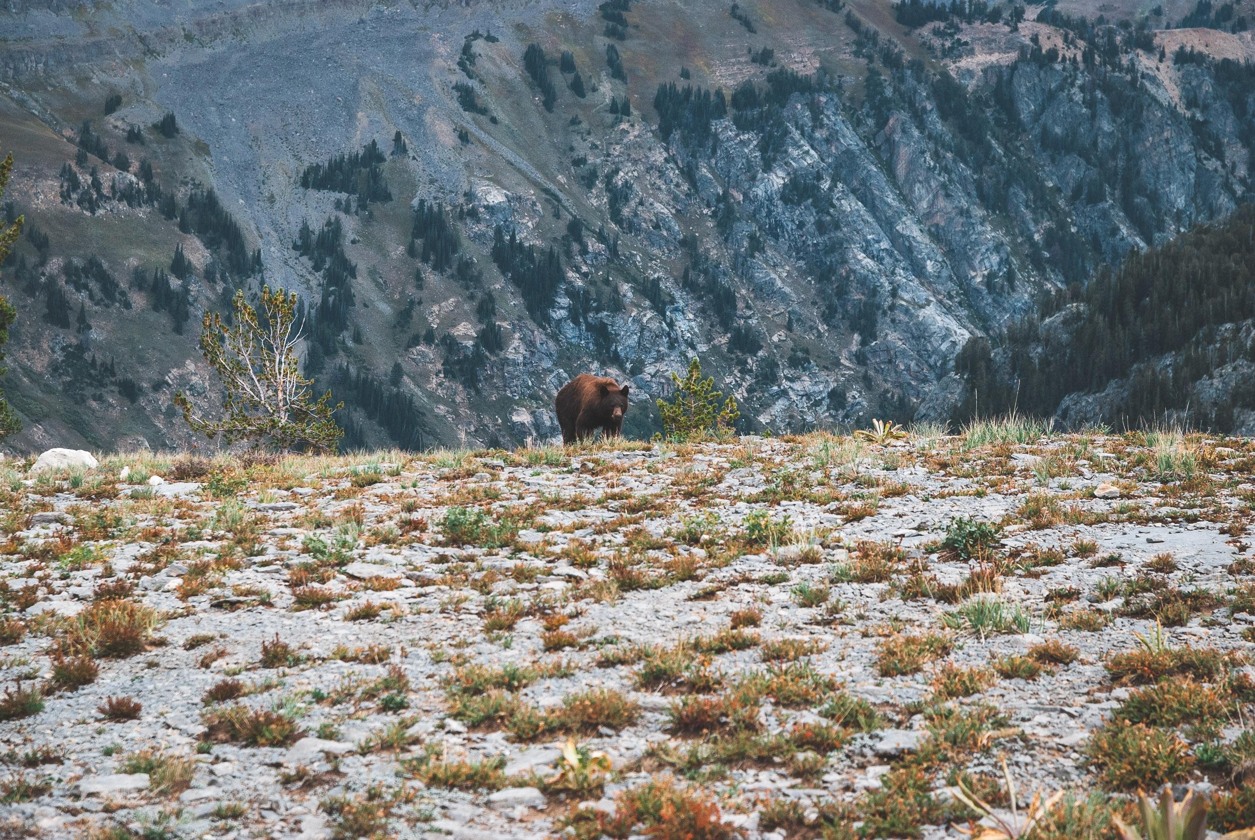 Grand Teton National Park - 2007-0901-DSC_0044_16900