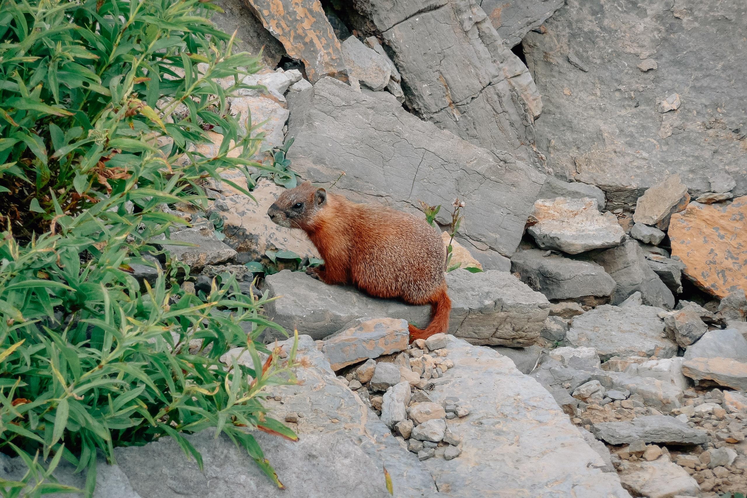 Grand Teton National Park - 2007-0901-P1000987