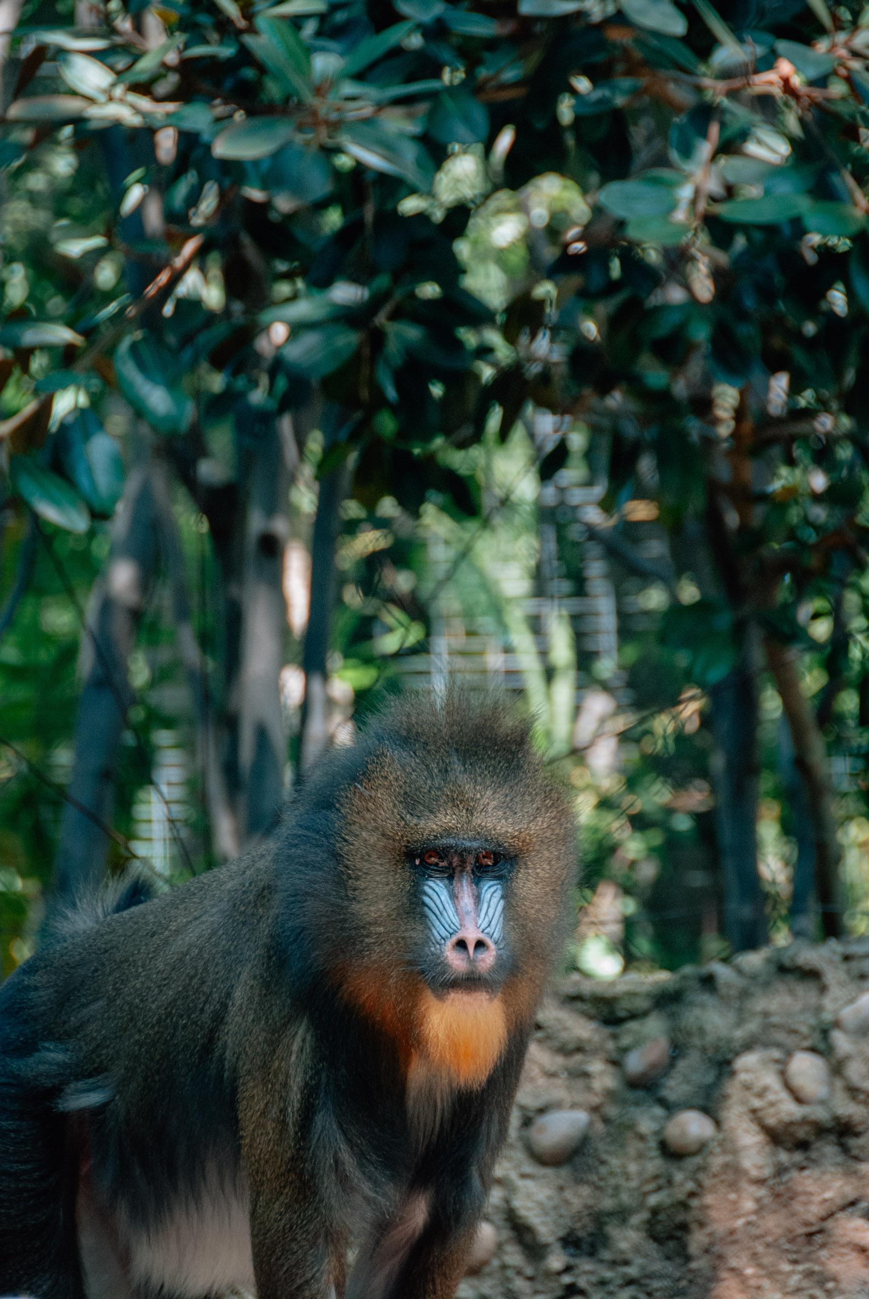 San Diego Zoo - 2009-0919-DSC_0198_117106
