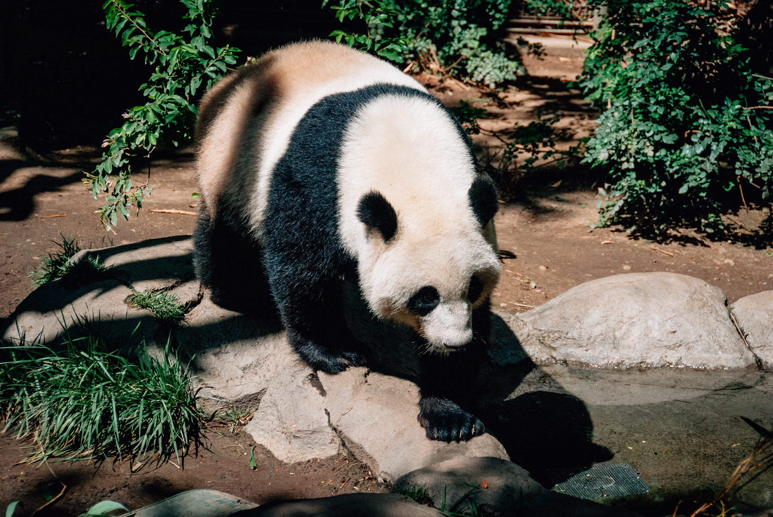 San Diego Zoo - 2009-0919-DSC_0238_96642