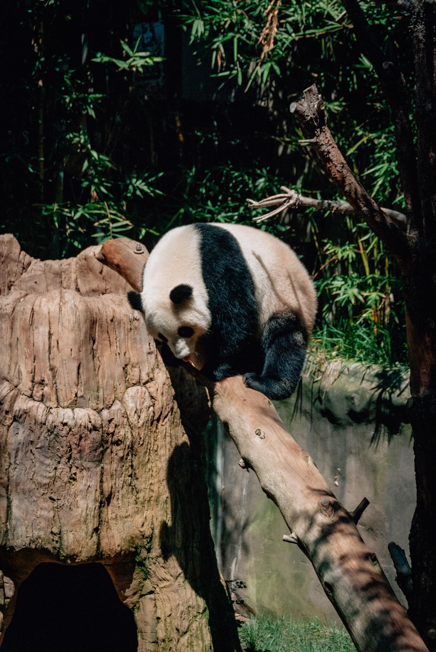 San Diego Zoo - 2009-0919-DSC_0242_45394