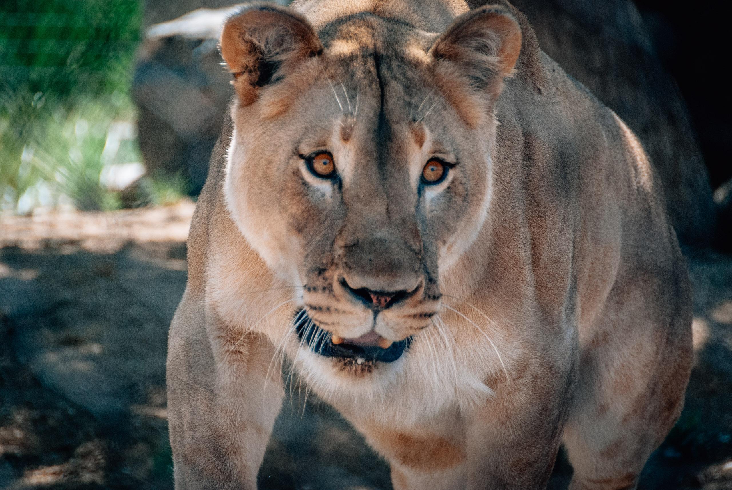 San Diego Zoo - 2009-0919-DSC_0321_17272