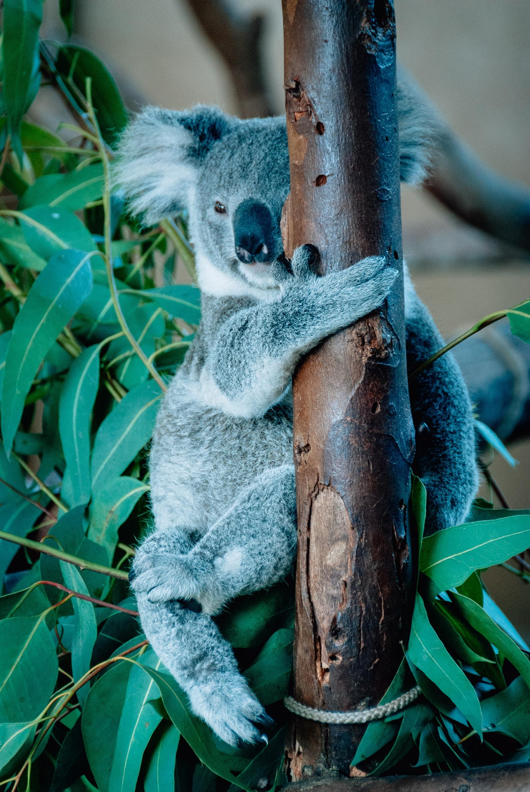 San Diego Zoo - 2009-0919-DSC_0345_78715