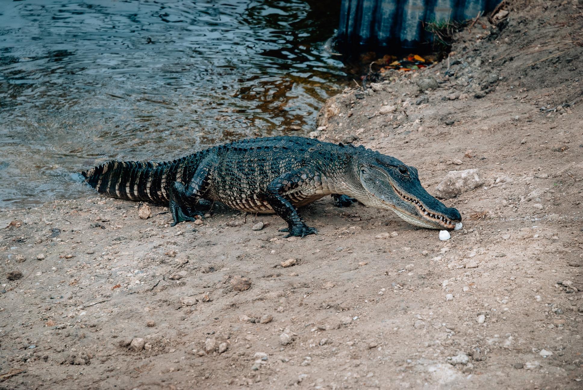 Thanksgiving in Marco Island - 2010-1125-DSC_0008_118389