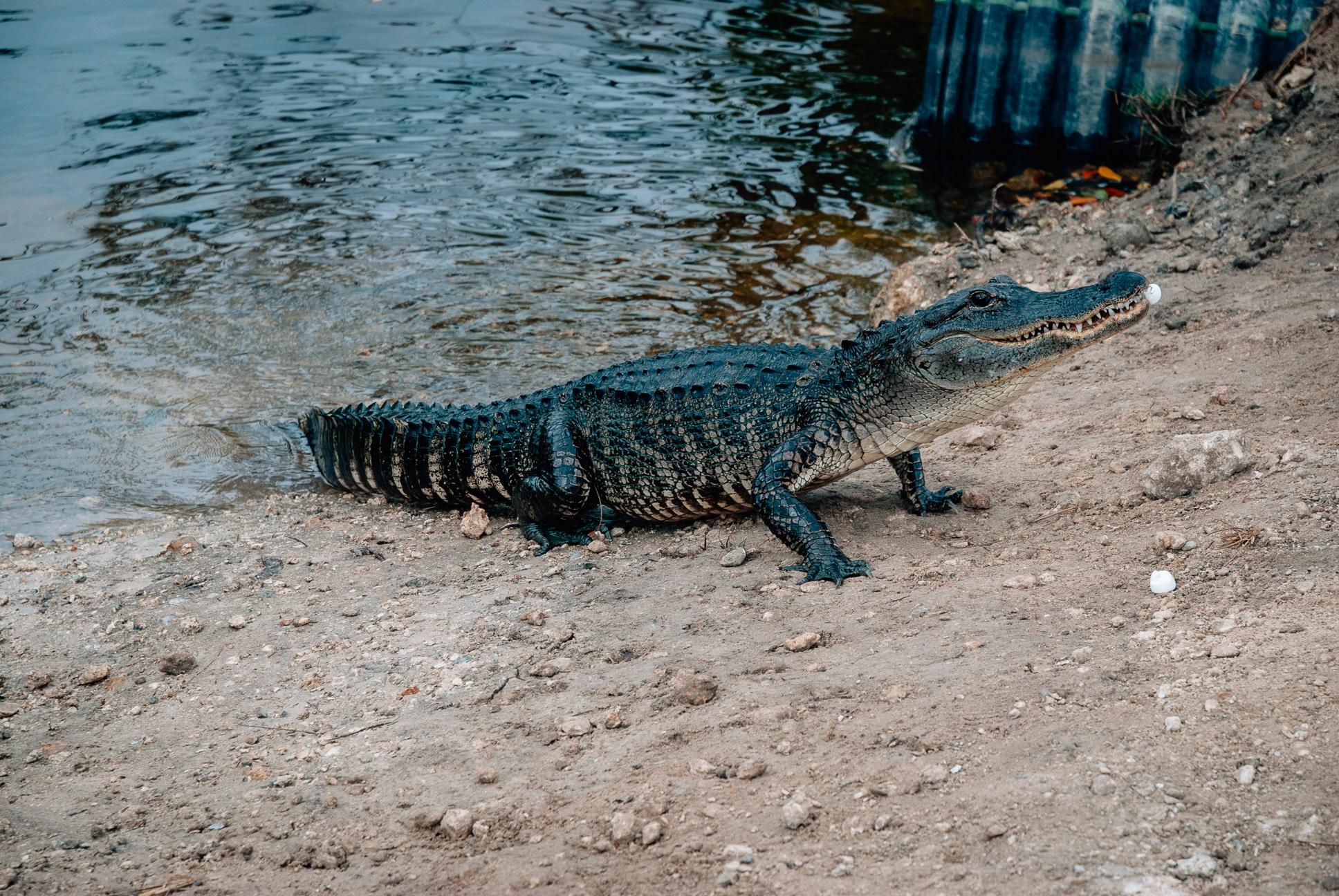 Thanksgiving in Marco Island - 2010-1125-DSC_0009_8120