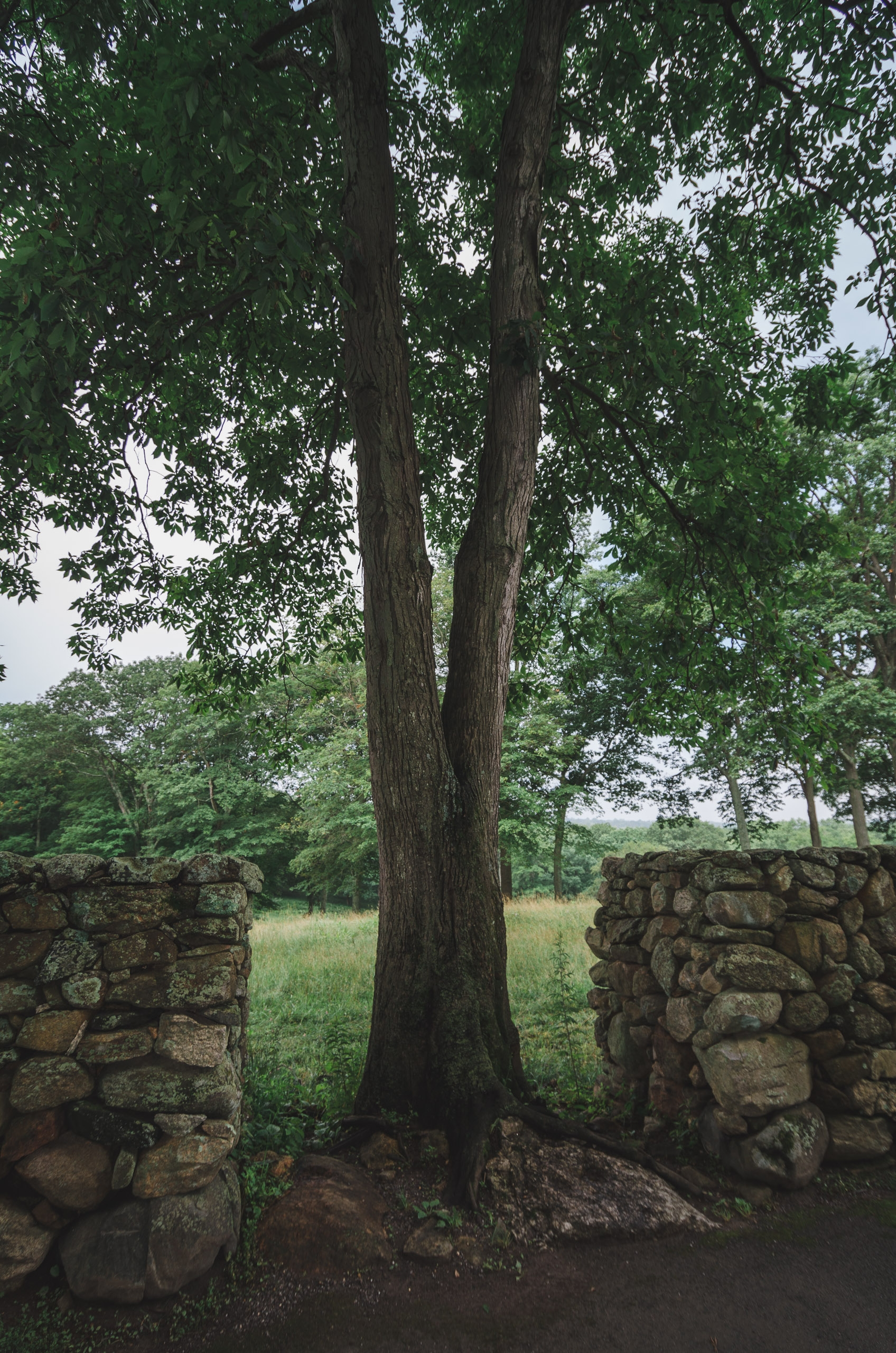 Trees and the Stone Wall