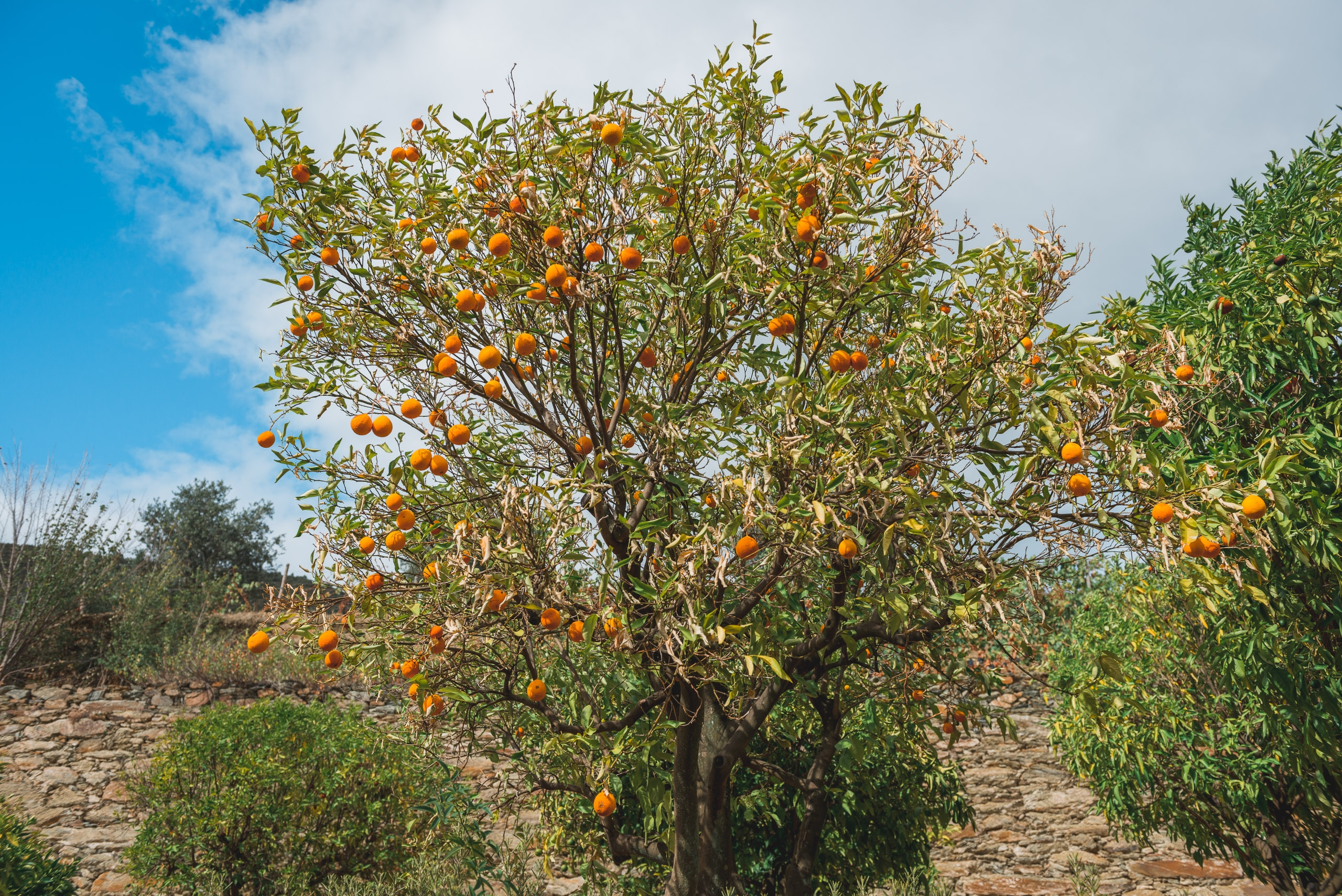 Oranges of the Duoro Valley