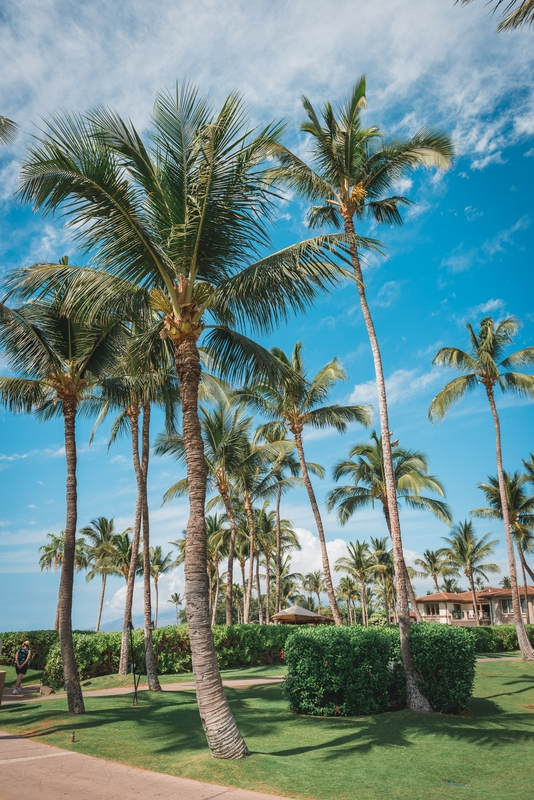 Palm Trees at the Grand Wailea
