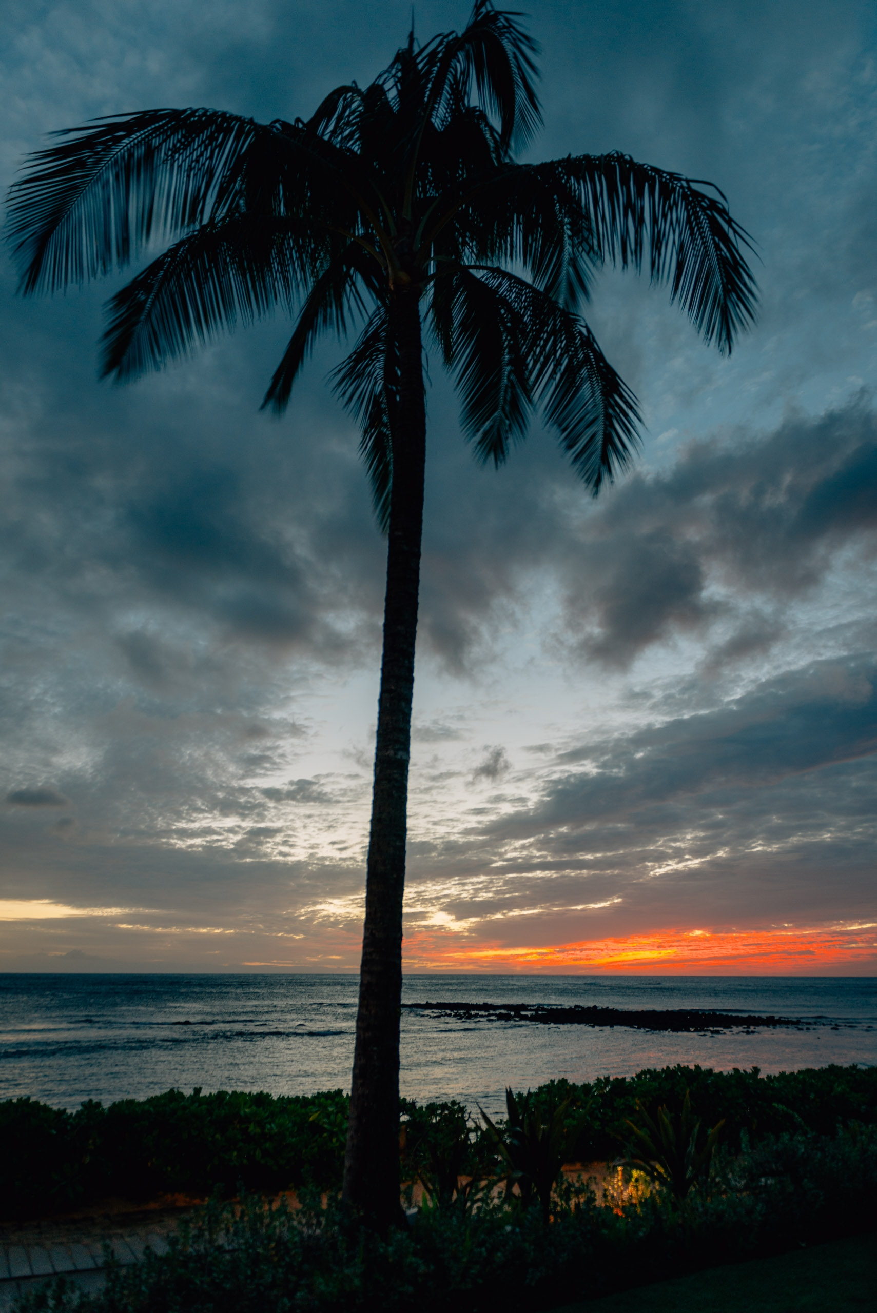 Palm Trees at Sunset 2