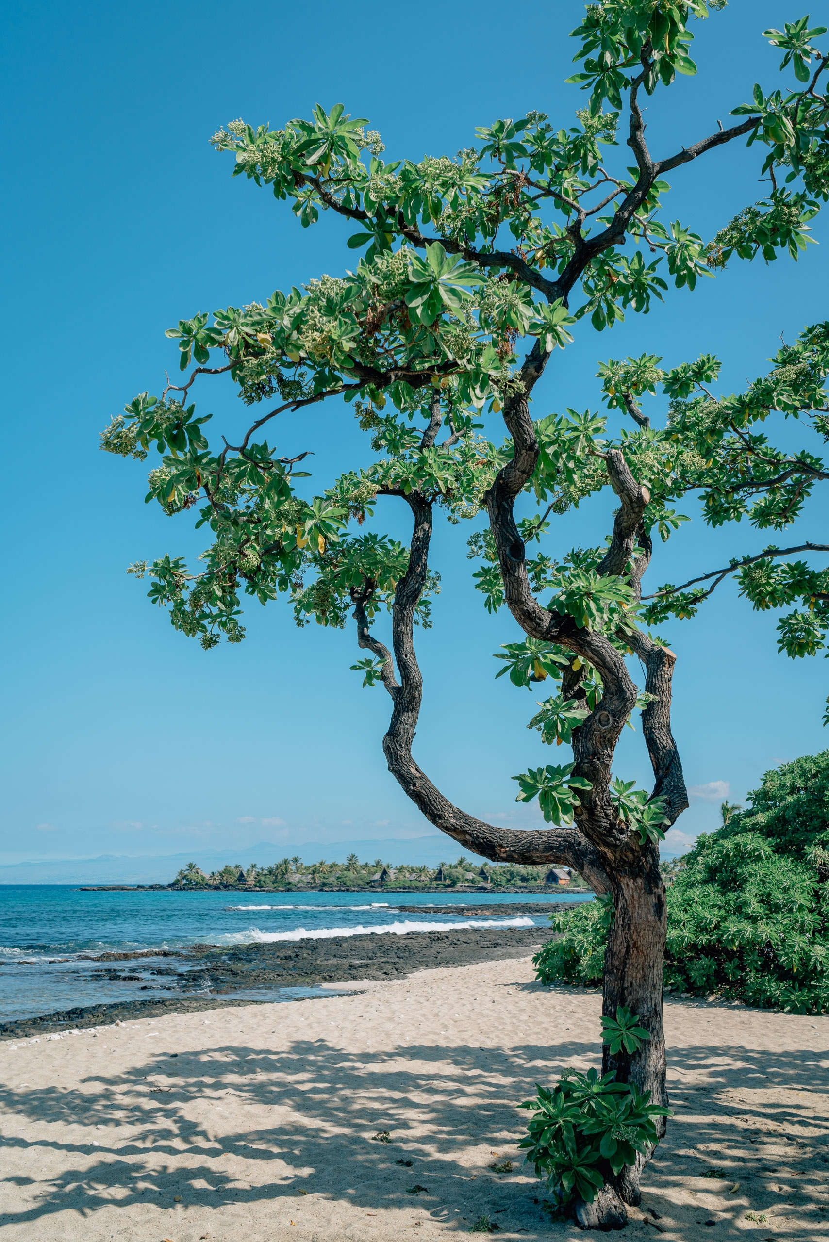 A Tree by the Beach