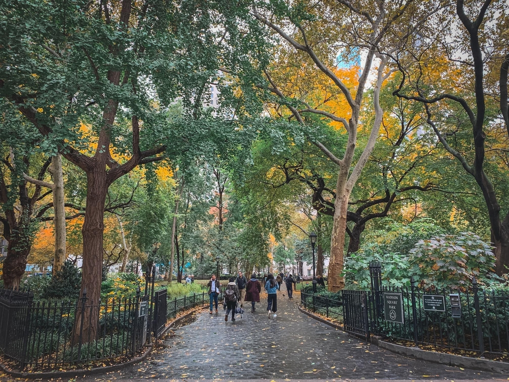 Fall in Madison Square Park